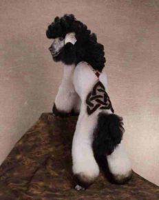 Безумная собачья стрижка с рисунком