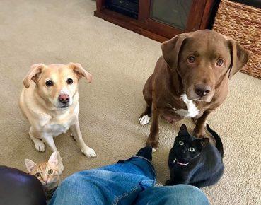 Собаки попрошайки
