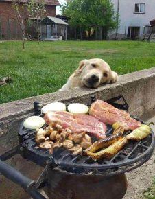 Собака попрошайка
