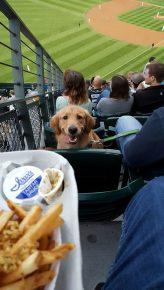 Собака попрошайничает еду