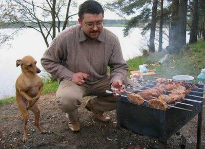Собака помогает жарить шашлык