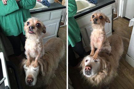 Собаки попрошайничают