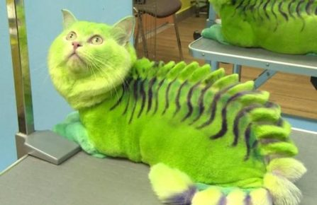 Ужасная стрижка кота