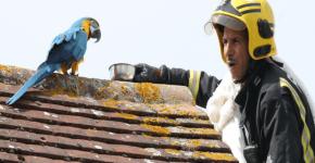 Привередливая самка попугая