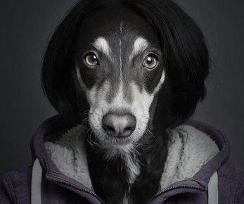 Собаки, похожие на людей