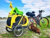 Такса-путешественница колесит по свету