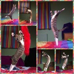 : 6 фото танцующих кошек