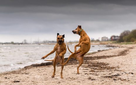 Танцующие собаки на берегу моря