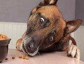 Ушлый пёс технично крадёт еду из магазина
