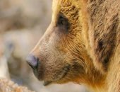 Якутский медведь попал в передрягу