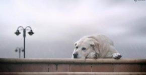Что делать, если потерялась собака