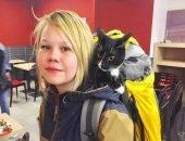 Кошка Зухра путешествует автостопом