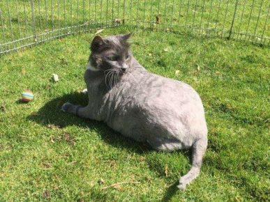 Кот весит 10 кг, но относительно здоров