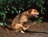 Почему собака ездит на попе — что делать