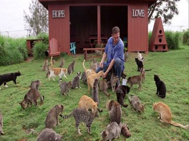 Помощник в заповеднике котов