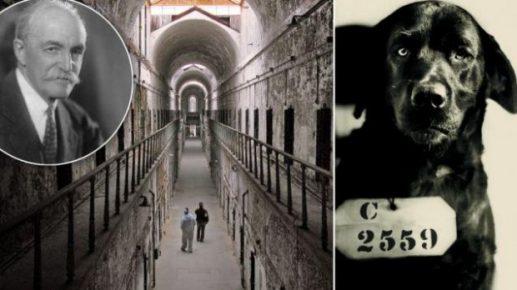 собака которая была приговорена к пожизненному заключению