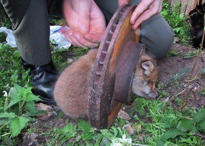 животные застрявшие в неожиданных местах