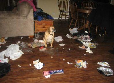как домашние животные могут превратить квартиру в ад