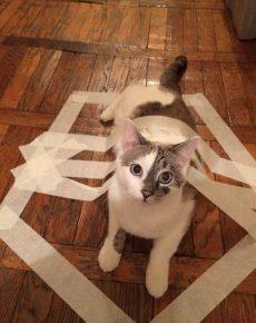 как поймать кота в ловушку