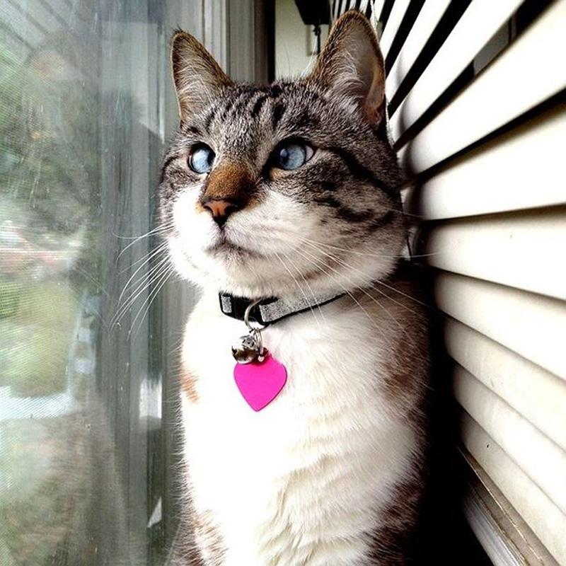 Самые смешные картинки мира с кошками, дружеские