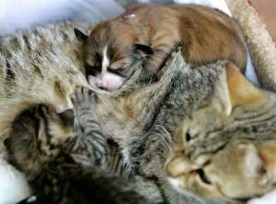 приемные мамы для животных