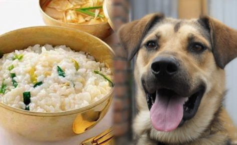 Собака и каша