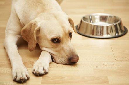 Собака рядом с миской