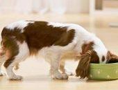 Какие крупы можно давать собакам
