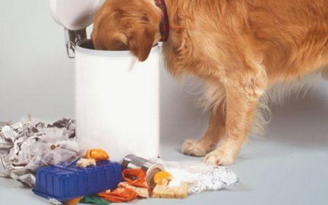 Собака копается в мусоре