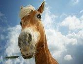 Сотрудники МЧС спасли лошадь из двухметровой ямы