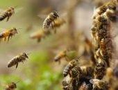Рой пчёл