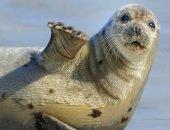 Тюлень преследует бабочку за стеклом оквариума