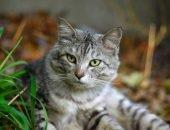 В Новой Зеландии избавляются от котов