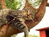 Заповедник для котов - местная достопримечательность