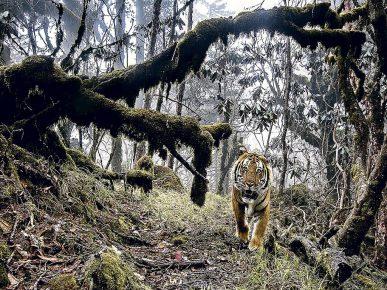 «Земля тигра»