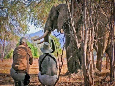 Национальный парк Мана-Пулс в Зимбабве