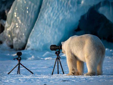 Белый медведь и камера