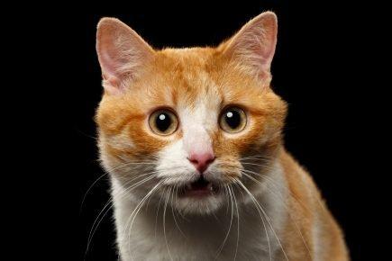 кот принюхивается