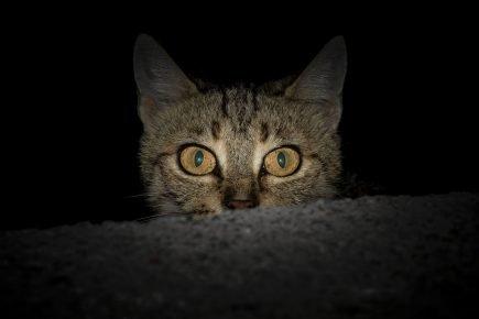 кот в сумерках