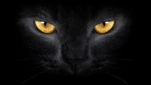 кот в темноте