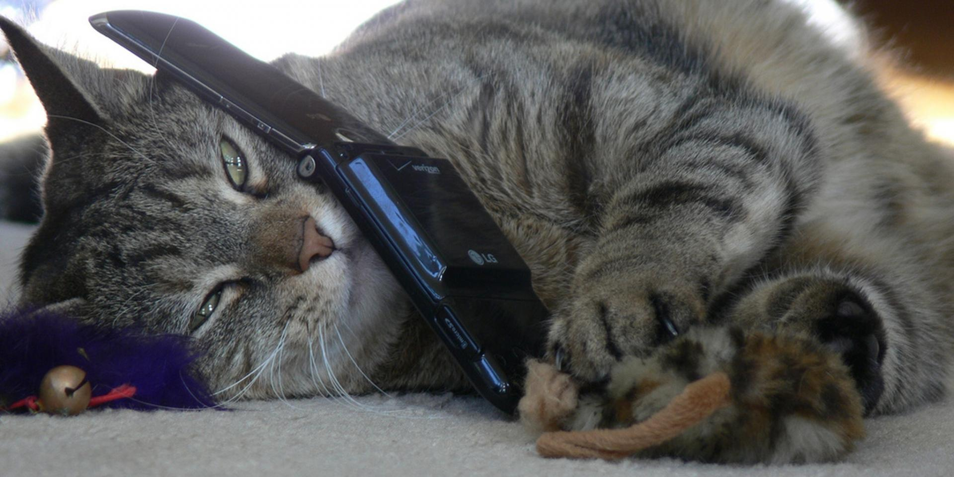 Кот и телефон картинки приколы