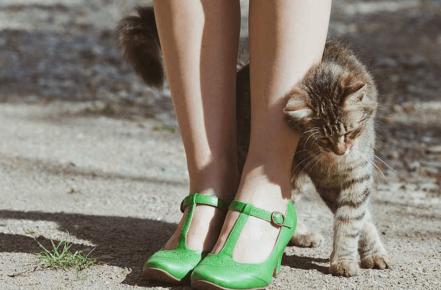 Кошка трётся о ноги