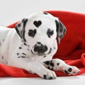 щенок с сердечком