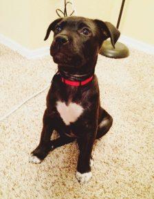 Собака с большим сердцем