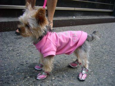 Собака в розовом костюме