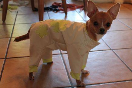 Собака в осенней одежде с аппликацией