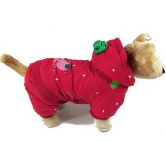 Собака в костюме с капюшоном