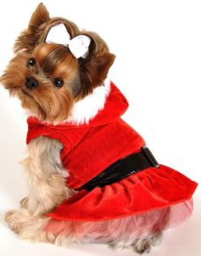 Собака в костюме Санта Клауса