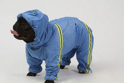 Собака в костюме из непромокаемой ткани
