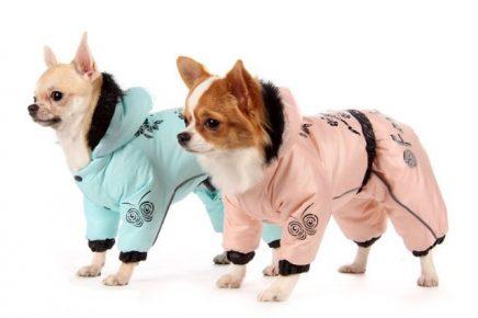 Собаки в элегантных костюмах с капюшонами